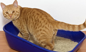 5 Signs Your Cat May Revolt Against the Litter Box