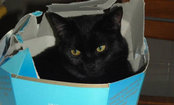 Cat Hides in a Snack Box–Caption Contest Winners!