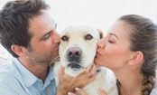 Divorcing With Pets: Who Gets to Keep the Dog?