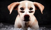 Adorable Rescue Puppies Prepare for Puppy Bowl XI