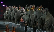 5 Better Things to Do Than Go to the Circus