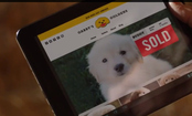 GoDaddy's Super Bowl Puppy Ad: A Miss, Fumble, and Failed Recovery