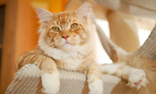 A Cat's Letter to His Human: How to Love Your Cat