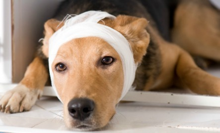 5 Pet First Aid Tricks You Can Do At Home