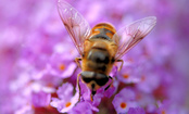 What Can We Do to Save the Bees?