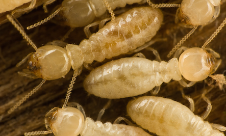How to Spot And Treat Termites