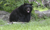 Protect People From Bears Without Killing The Bears