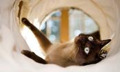 7 Friendliest Cat Breeds