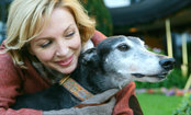 Myths About Rescuing Deaf Dogs