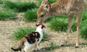 Daily Cute: Sweetest Deer Gives Cat a Bath
