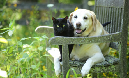 differences between dating a dog person vs cat person care2