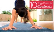 Yoga for Gardeners: Recover from the Garden on the Mat