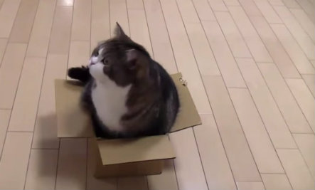 Daily Cute: Cat is Convinced He Can Fit in This Tiny Box