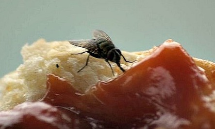 8 Natural Ways To Get Rid Of House Flies Care2 Healthy Living
