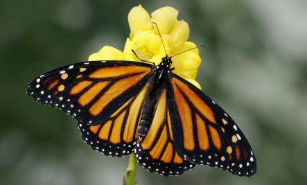 Cómo atraer las mariposas a su jardín | Care2 Vida sana