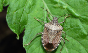 10 Ways To Keep Stink Bugs From Stinking Up Your House