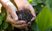 Can Human Bodies Become Compost?