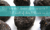 Do Seed Bombs Really Work?