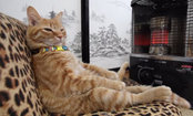 Daily Cute: Cat Gets Warm Like a Human