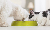 5 Amazing Health Benefits of Pet Ownership