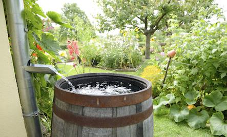 rain barrel for gardening
