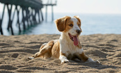 4 Summer Dog Dangers to Avoid