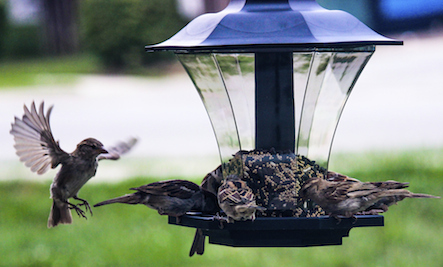 Magpie Birds In Backyards the pros and cons of backyard bird feeders | care2 healthy living