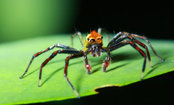 Why it Rains Spiders in This Australian Town