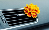 DIY Air Fresheners For Your Home & Car