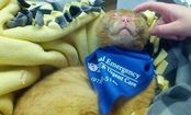 Fire-Survivor Cat Now Nurses Other Animals