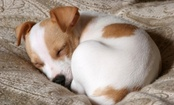 4 Odd Dog Sleeping Habits Explained