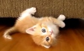 Daily Cute: Cats Sliding on Wooden Floors