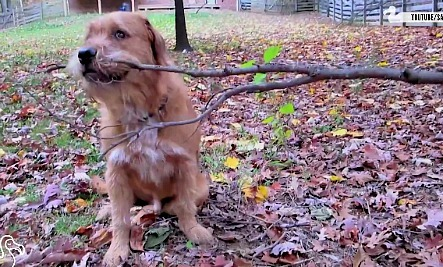Daily Cute: Dogs Who Found the Perfect Stick