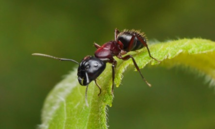 garden ants. 4 Ways Ants Are Good For You And Your Garden N