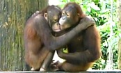 Daily Cute: Love is Love