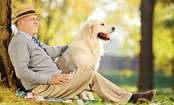 Does Your Pet Have an Estate Plan?