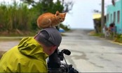 Daily Cute: Kitten Adopts Cameraman