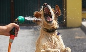 Can Too Much Water Kill Your Dog?