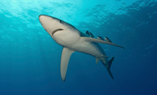 Shark Week: 12 Fascinating Facts That Prove Sharks Are Awesome