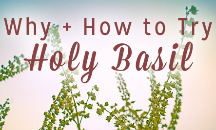 Holy basil sexual benefits