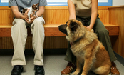 Are Large Dogs Better Behaved than Small Ones?