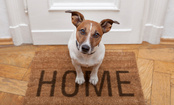 6 Humane Ways to Help Your Dog's Separation Anxiety
