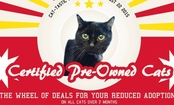 Shelter Sells Older Cats Like Used Cars