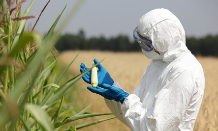 Are GMO's Safe? The Case Of Bt Corn | Care2 Healthy Living