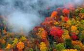 The Complete Guide to Fall Foliage (Infographic)