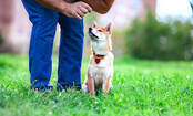 7 Strategies for Training a Stubborn Dog