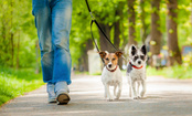 How Can We Turn Dog Walking Into Exercise?