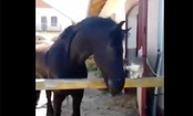 Daily Cute: Cat and Horse are Best Friends