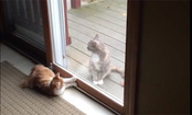 Daily Cute: This Cat Really Wants His Friend's Attention