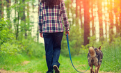 6 Tips for Keeping Your Dog Safe During Dog Walks
